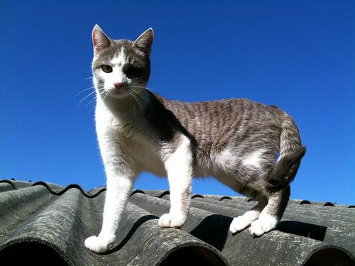 gato no telhado.jpg